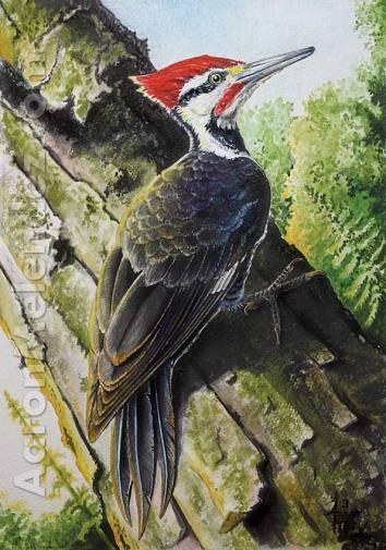 In-the-Parking-Lot-(Pileated-Woodpecker)